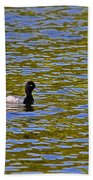 Striking Scaup Beach Towel