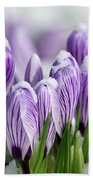 Striped Purple Crocuses In The Snow Beach Towel