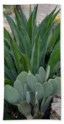 Succulent Greens Beach Towel