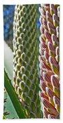 Succulents IIi Beach Towel