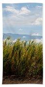 Sugar Cane Field - Maui Beach Towel