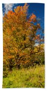 Sugar Maple 3 Beach Towel
