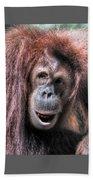 Sumatran Orangutan Beach Towel