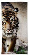 Sumatran Tiger  Beach Towel