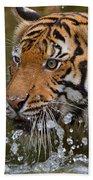 Sumatran Tiger Splashing In The Water Beach Towel