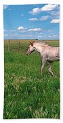 Summer Colt Beach Towel
