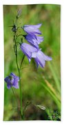 Summer Flowering Harebell Beach Towel