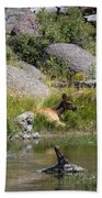 Summer Morning Dip - Elk In Yellowstone National Park - Wyoming Beach Towel