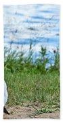 Summer Sea Gull Beach Towel