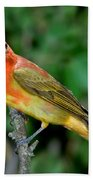 Summer Tanager Changing Color Beach Towel