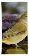 Summer Tanager Female In Water Beach Towel