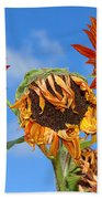 Sun Drenched In Autumn By Diana Sainz Beach Towel
