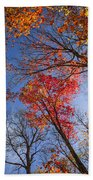 Sun In Fall Forest Canopy  Beach Towel