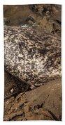 Sunbathing Sea Lion Beach Towel