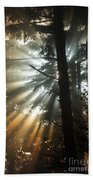 Sunbeams Through Trees Beach Towel