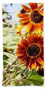 Sunflower Cluster Beach Towel