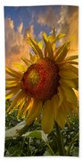 Sunflower Dawn Beach Towel by Debra and Dave Vanderlaan