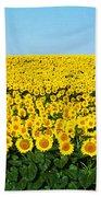 Sunflower Field, North Dakota, Usa Beach Towel