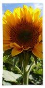 Sunflower Highlight Beach Towel
