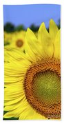 Sunflower In Field Beach Towel by Elena Elisseeva
