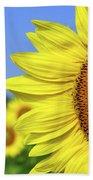 Sunflower In Sunflower Field Beach Towel by Elena Elisseeva