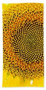Sunflower In The Summer Sun Beach Towel