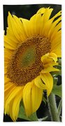 Sunflower Looking To The Sky Beach Towel