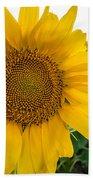 Fibonacci In Full Bloom Beach Towel