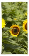 Sunflower Patch Beach Towel by Bill Cannon