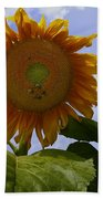 Sunflower With Busy Bees Beach Sheet