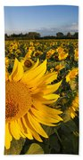 Sunflowers At Dawn Beach Towel