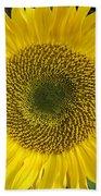 Sunflower's Cluster Beach Towel