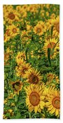 Sunflowers Helianthus Annuus Growing Beach Towel
