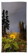 Sunflowers In Northern Garden In Fall Beach Towel