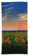 Sunflowers In The Evening Beach Towel