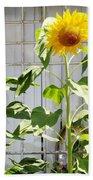 Sunflowers In The Window Beach Towel