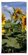 Sunflowers Beach Towel by Kerri Mortenson