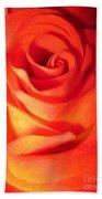 Sunkissed Orange Rose 10 Beach Towel