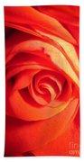 Sunkissed Orange Rose 11 Beach Towel