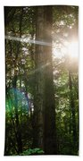 Sunlight Forest Beach Towel