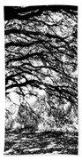 Sunlight Through Spanish Oak Tree - Black And White Beach Towel