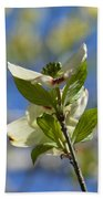 Sunlit Dogwood Blossoms Beach Towel