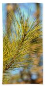 Sunlit Pine Leaders Beach Towel