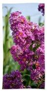 Sunlit Purple Crepe Mertle Beach Towel