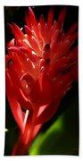Sunlit Red Bromeliad 2 Beach Towel
