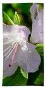 Sunlit Rhododendrons Beach Towel