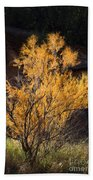 Sunlit Tree In Palo Duro Canyon 110213.06 Beach Towel