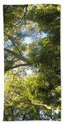 Sunlit Tree Tops Beach Towel