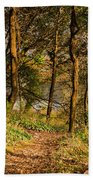 Sunlit Woods In Late Autumn Beach Towel