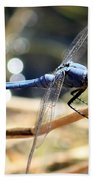Sunning Blue Dragonfly Square Beach Towel
